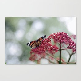 Butterfly Love for Red Flowers Canvas Print