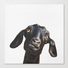 Billy Goat Canvas Print