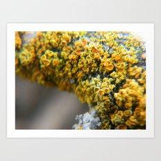Golden Lichen Art Print
