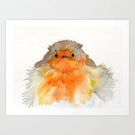 Fluffy Red Robin Art Print