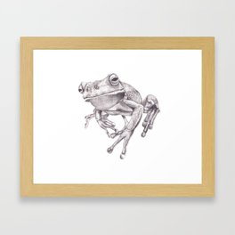 Pencil Drawing - White Lipped Tree Frog Framed Art Print