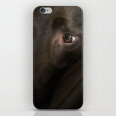My Friend Chocolate Lab iPhone & iPod Skin