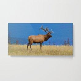 Bull elk in Jasper National Park Metal Print