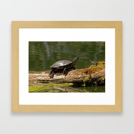 Painted Turtle on a Log - Photography Framed Art Print
