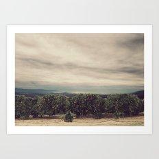 Orange Groves Art Print