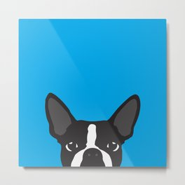 Boston Terrier Blue Metal Print
