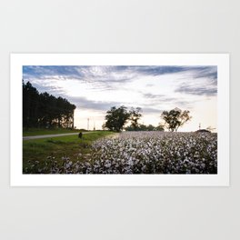 Cotton Field 9 Art Print