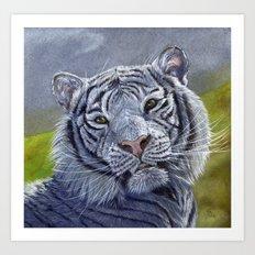 White Tiger 1207b Art Print