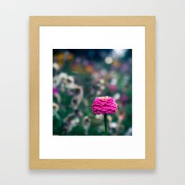 One flower to please them all Framed Art Print