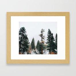 Snow Capped Pine Trees Framed Art Print