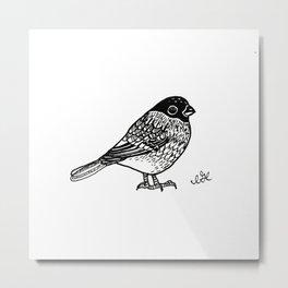 Bullfinch Birb Metal Print