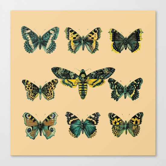 Butterflies and Moth of Europe Canvas Print