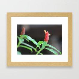 Flor de Jicaro Framed Art Print