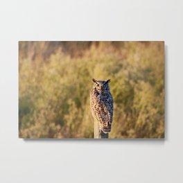 Greathorned Owl Metal Print