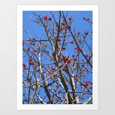 Blossoms On A Barren Tree Art Print