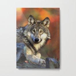 AUTUMN WOLF Metal Print