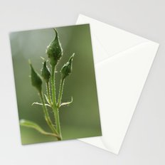 New Rose Unbloomed Stationery Cards