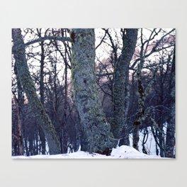 feel tree Canvas Print