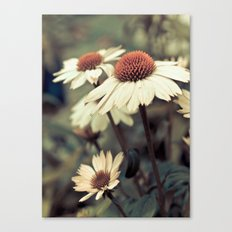 Soft white cone flower Canvas Print