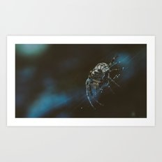 Spider Creeper Art Print