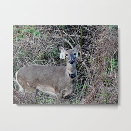 """""""Mommy, what is wrong with that deer?"""" Metal Print"""