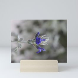 Blue Salvia Mini Art Print