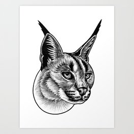 Caracal cat - ink illustration Art Print