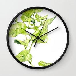 Devils Ivy Illustration Wall Clock