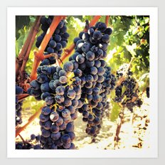 Napa Valley Grapes Art Print