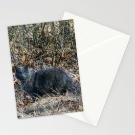 Cat in the Woods Stationery Cards