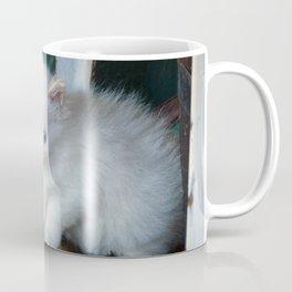 White Kitten Coffee Mug