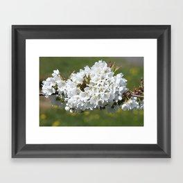 the smell of spring -4- Framed Art Print