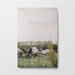 Wild horses standing in the field | Netherlands | Wildlife photography Metal Print