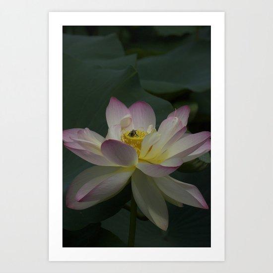 Lotus flower 3 Art Print