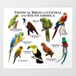 Tropical Birds of South and Central America Art Print