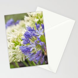 Striking Blue and White Agapanthus Flowers Stationery Cards