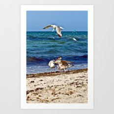 Seagulls screaming Art Print