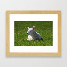A Special Spring Present Framed Art Print