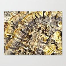 Fungi Day Canvas Print