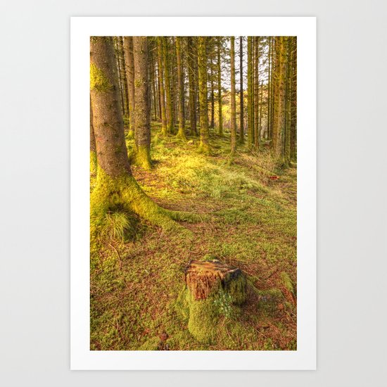 Stump Wood Art Print