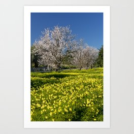 Almond trees and wild flowers (in Portugal) Art Print