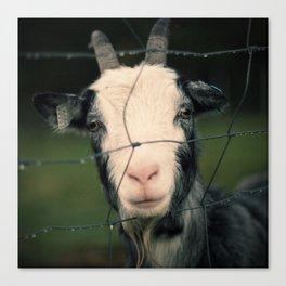 The Goat II Canvas Print