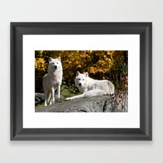Arctic Wolf On Rocks Framed Art Print