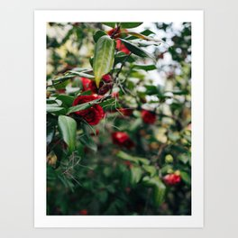 Red Floral II Art Print