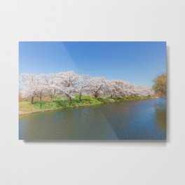 Beautiful cherry blossoms and river Metal Print