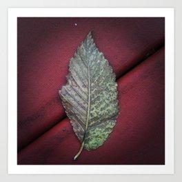 Leaf no. 1 Art Print