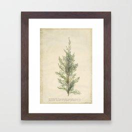 Botanical Juniper Framed Art Print