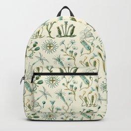Ernst Haeckel - Scientific Illustration - Campanariae Backpack