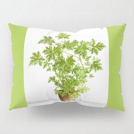 Pelargonium citrosum plant Pillow Sham