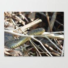 water snake II Canvas Print